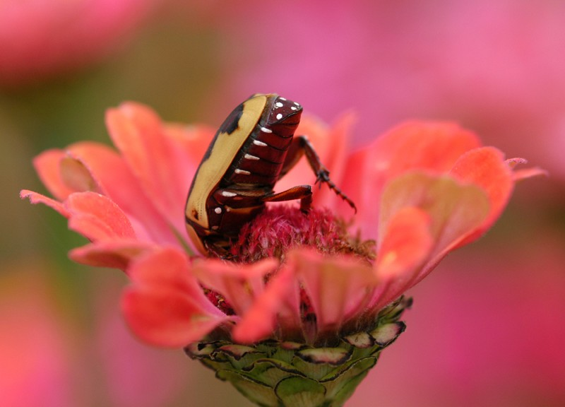 0903Flower-with-Beetle-800x5761