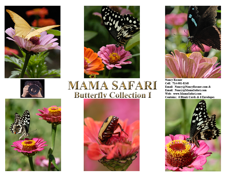 Butterfly-Collection2702BF