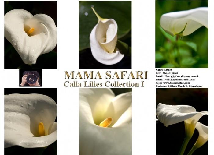 Calla-Lilies-Collect2737E4-792x576-e1423660471164